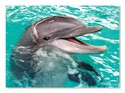 8935-60pc-Smiling-Dolphin-Jigsaw-Puzzle-by-Melissa-Doug_176197A.jpg