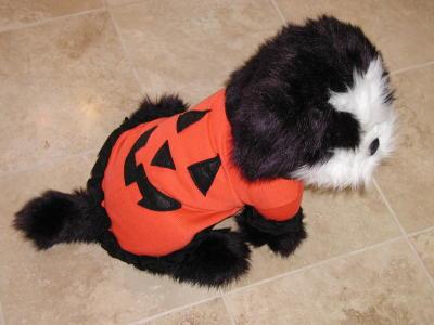 pet cat dog halloween costume pumpkin by