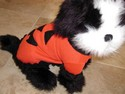Pet-Cat-Dog-Halloween-Costume---PUMPKIN-by-Ganz-Medium-EH0501_108657B.jpg