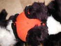 Pet-Cat-Dog-Halloween-Costume---PUMPKIN-by-Ganz-Medium-EH0501_108657C.jpg