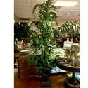 Palm-Tree_81513A.jpg