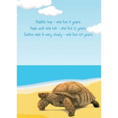 Turtle Birthday Birthday Card Eci Stores