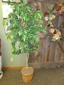 Brand N/A Silk Tree