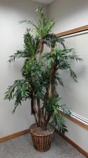 Trivey Silk Tree